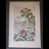 Gravure BUCHERT Plante Mer Marin Art Nouveau